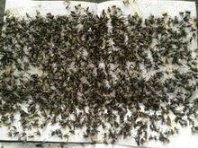20 pçs/lote Bastão de Cola Armadilha da Mosca Papel Mata Mosca Pega Moscas Fruitfly Mosquito Armadilhas Controle de Pragas de Insetos killer Mosca Coletores Nova