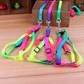 1 PCS Rainbow color Ajustável Coleira de Cão do animal de Estimação do Filhote de Cachorro Pequeno Gato Gatinho Coelho Nylon Leash Harness Collar Chumbo