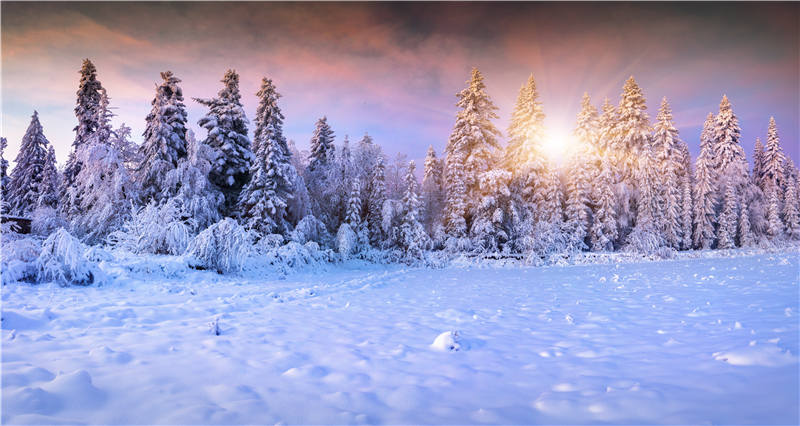 KIDNIU Sunrise Vinyl Photo Background Winter Snow Wallpaper Children Photography Backdrops Props Trees 9x5ft win1330 kidniu chair background for baby photo studio props scenic vinyl street photography trees backdrops screen 9x5ft an070