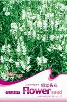 (Mix minimum order $5)1 original pack 20pcs Physostegia Virginiana balcony potted plants Seeds Free Shipping