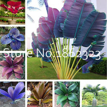 Rare Palm bonsai Variety Of Colors Bonsai Indoor Plants Flowers Leaves Of Plants Absorb Radiation, Balcony Courtyard Decor 50Pcs(China)