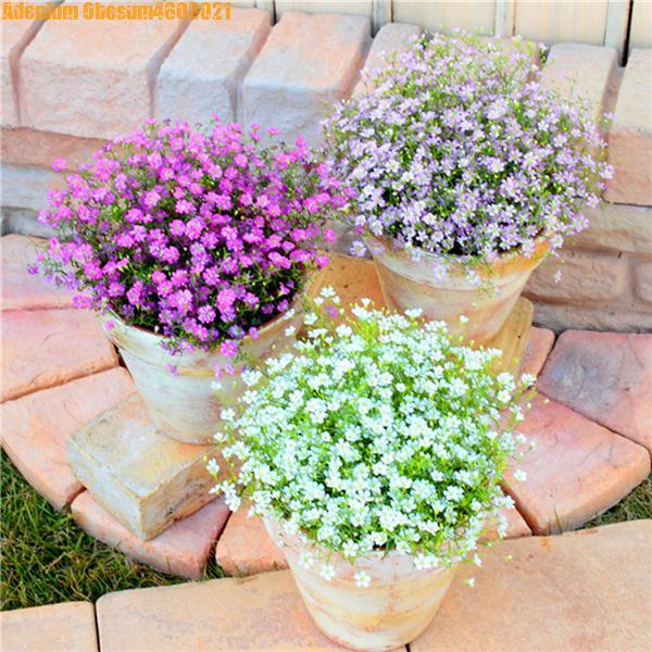 100Pcs Beautiful Starry Sky, Gypsophila, Bonsai, Decorative Plants, Natural, Wedding, Family Bedroom, Home Decoration  Free Ship