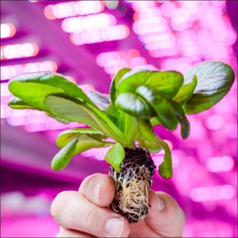 E26 E27 Round LED Full Spectrum Grow Light Plant Growing Light Bulb House Indoor Gardens