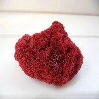Красный коралл натуральный concha manualidades аквариум интимные аксессуары Творческий морской ракушки Средиземноморский стиль домашний декор