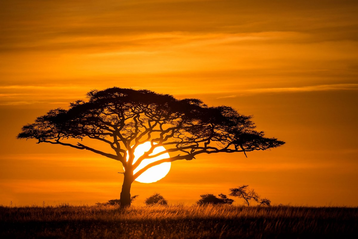 Sunset African Savannah Nature Landscape Trees Grasses