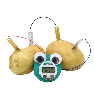 DIY Science Educational Potato