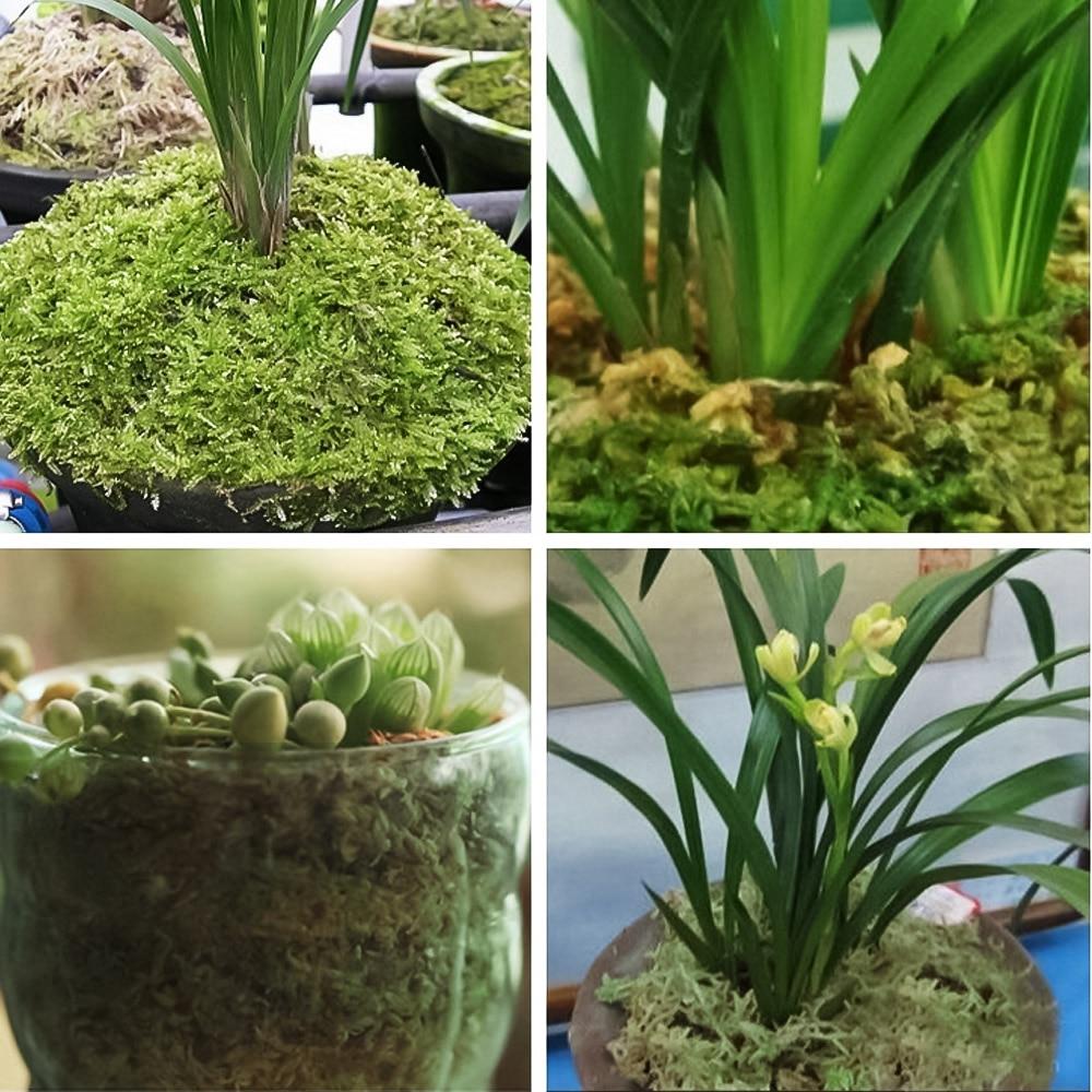 50g//bag Micro Landscape Garden supplies Green Artificial Dried Moss For Plants