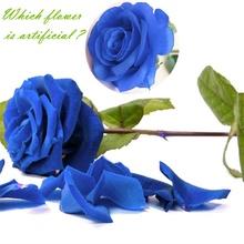 1pc jedwab sztuczne kwiaty róży dekoracje ślubne sztuczne kwiaty biały niebieski zielony różowy czerwony fioletowy sztuczne jedwabne kwiaty róże tanie tanio A088-093 Róża Bukiet kwiatów Ślub Jedwabiu white pink purple blue red green artificial flowers rose white Wedding valentine s day party christmas other fake flowers white