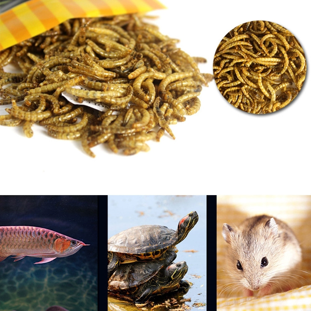 Turtle Fish Feeder Food Feed Sticks Granules Dried Fish Shrimp Bread Worms Reptile Aquarium Terrapin Tortoise Food image
