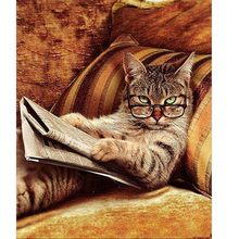 Frameless Pictures Painting By Numbers Hand Painted Canvas Cartoon Drawing Diy Oil 40*50cm Reading Book Cat