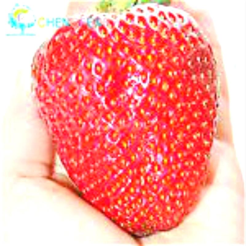 300/bag Giant Strawberry Seeds Rare Big As A Peach Fragaria Ananassa L. Maximus Strawberry Fruit Seeds For Home Garden Plantes