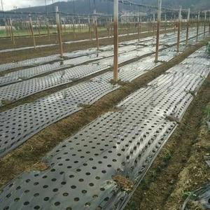 Image 5 - 5 отверстий 95 см * 50 м 0,02 мм, черная садовая мембрана для овощей, сельскохозяйственные растения, мульчирование, сеялка, пластиковая перфорированная полиэтиленовая пленка