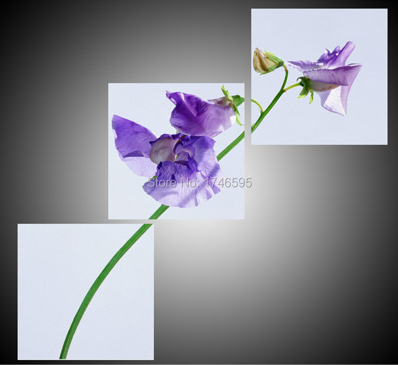 lavanda orchidea-acquista a poco prezzo lavanda orchidea lotti da