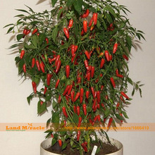 NON-GMO Serrano Red Pepper Seeds, 50 Seeds/Pack, Edible Vegetable Hot Chilli Bonsai Plants For Home & Garden