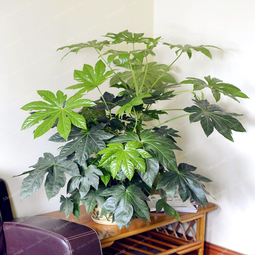 Palm tree turtle leaves monstera potted plants seeds 7 uncommon indoor plants