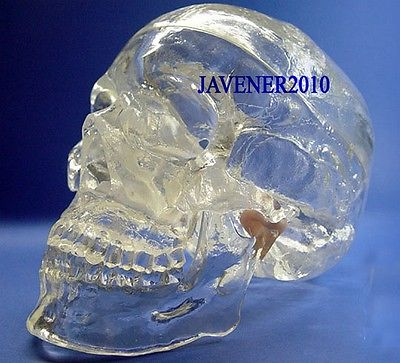 Human Anatomical Anatomy Head Skull Skeleton Medical Model Transparent mini skull human anatomical anatomy head medical model human anatomical skull model model of the medical skull painting model