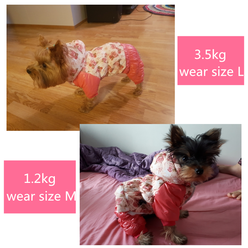 Winter Dog Clothes (2a)_
