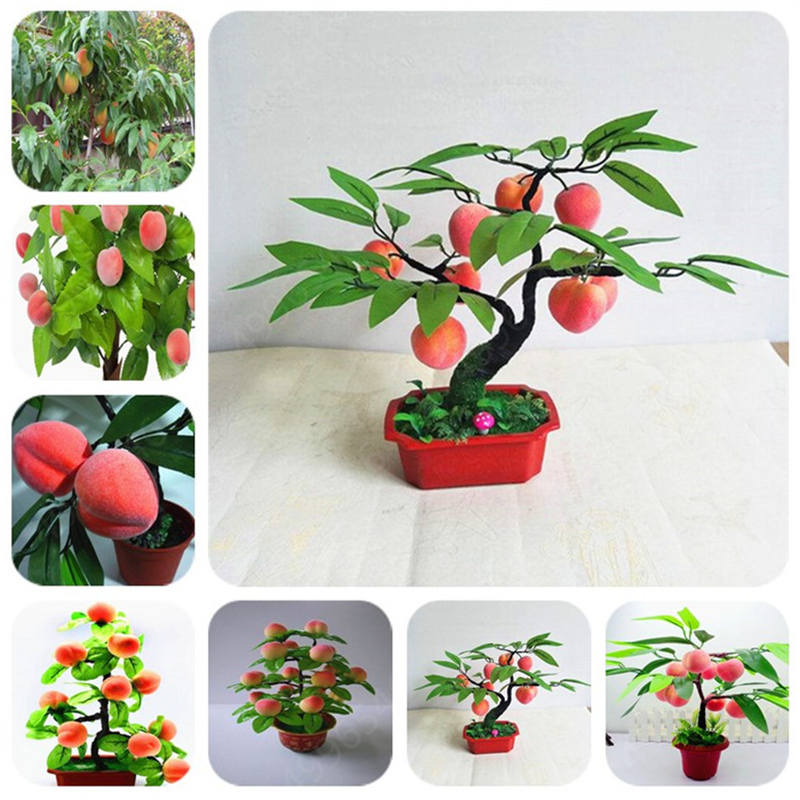 2019 New Product !2pcs Peach Bonsai Tree Eat Delicious Juicy Meaty Fruit Diy Garden For Home Garden Potted Plants  Free Shipping