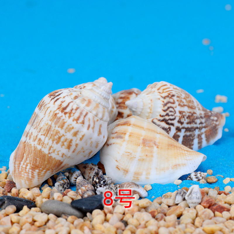 10-30PC set micro landscape of the conch seascape accessor shells wax snail fish tank world Marine DIY materials Home decoration