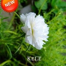 Time-Limit!!200 Seeds/lot White Portulaca Seed Flower Garden Potted Bonsai Plants Flower Purslane Seeds Scutellaria Barbata,#UZY