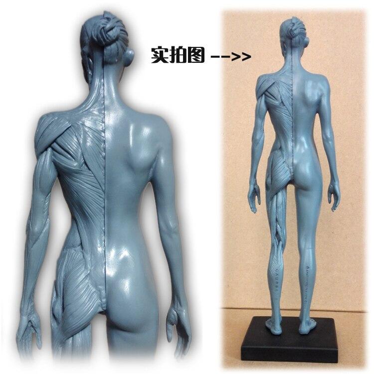 30 cm Menschlichen Weibliche Modell Anatomie Schädel Kopf Muscle ...