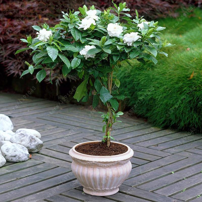 Online Buy Wholesale Indoor Plant Pots From China Indoor