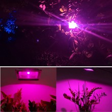 AC 220V COB LED Grow light Chip 20w 30w 50w full spectrum Phyto Lamp 380nm-840nm for Indoor Plant Seedling Grow Flower LED Bulb