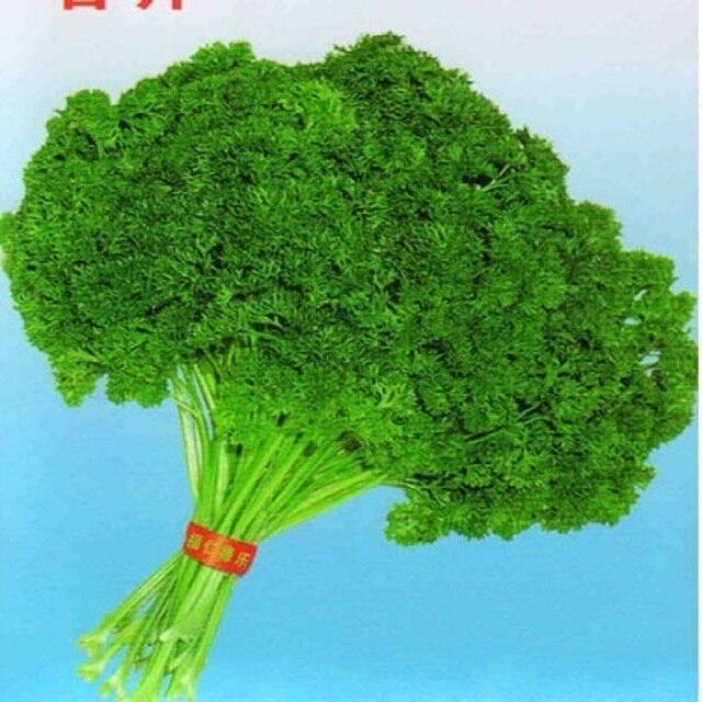 Сморщенный Листьев Петрушки Семена Европа-Петрушка Права Ароматные Семена Овощных (100 Семена)