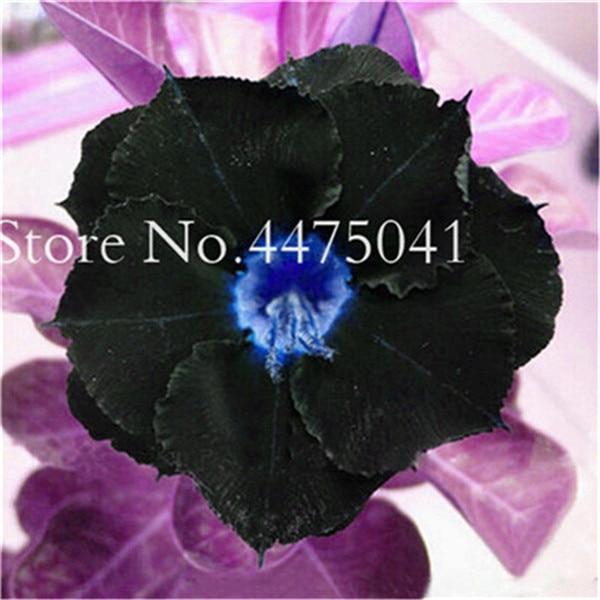24948AF6EBE32D53AB27C8FA4AF927F9