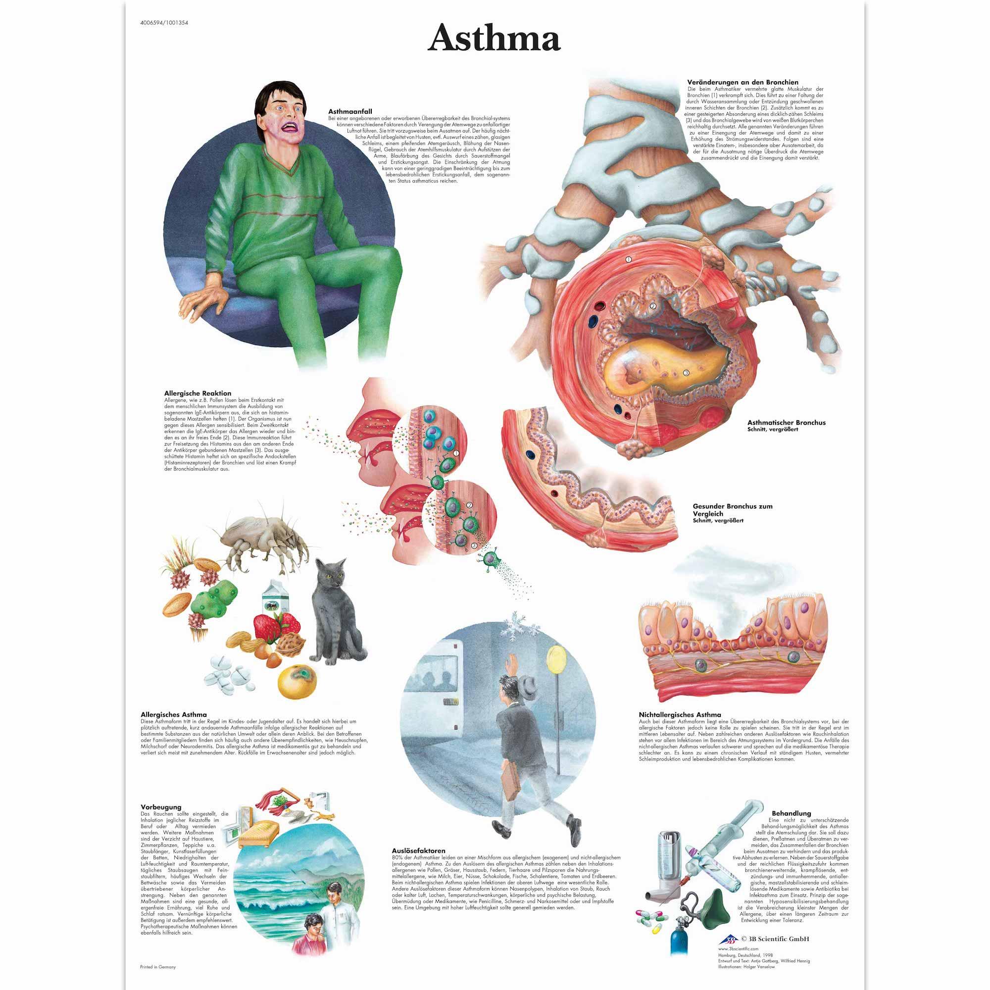 Anatomy Pathology Anatomical Human Body Part Head To Neck Classic ...