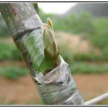 DHL 500 шт высокого качества 2 см x 100 м прививочная лента садовые инструменты фруктовое дерево секаторы Engraft ветка садовый пояс пвх связующая лента