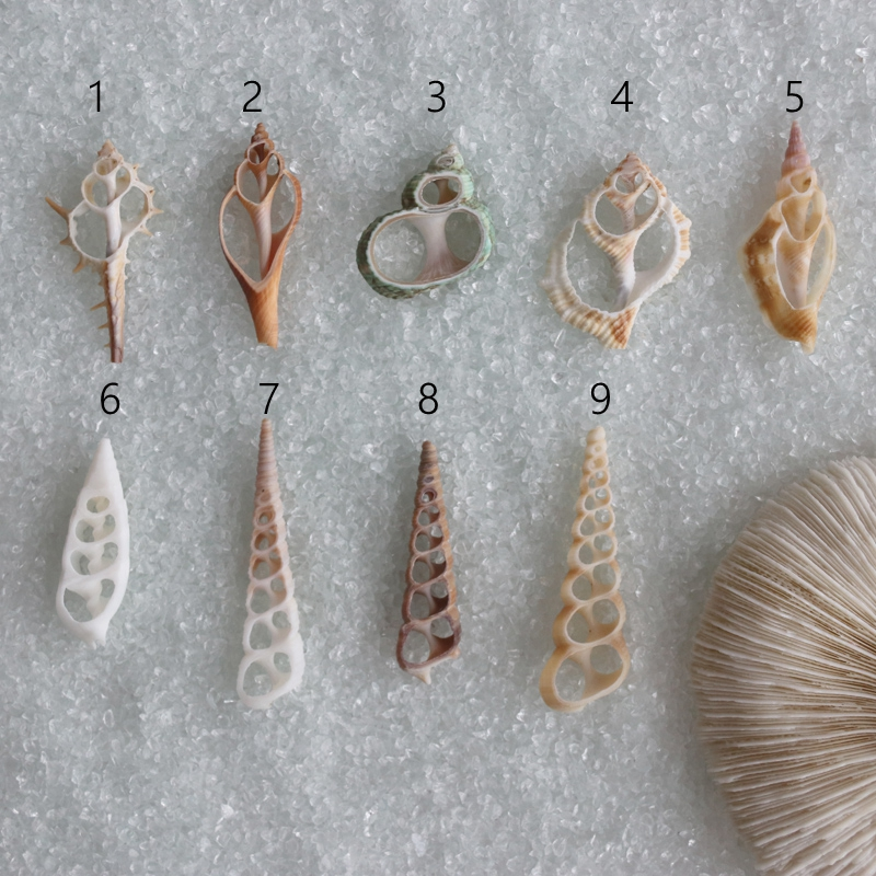 Free Shipping(20pcs/lot)Natural Cut Shells Natural Shell Conch Tribal Jewelery Craft Accessories DIY