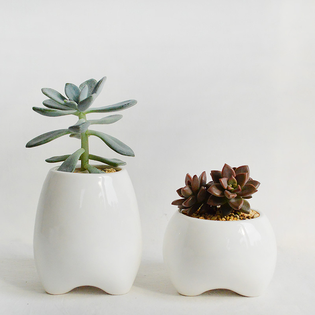 Set Of 2 Tooth Shape Flower Pots White Ceramic Planter Teeth Mini Desktop Succulent Without Plants
