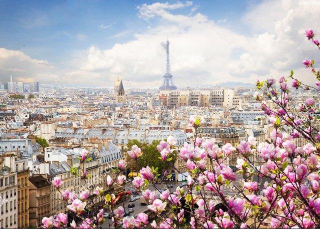 paris france city skyline clouds eiffel tower spring pink flower