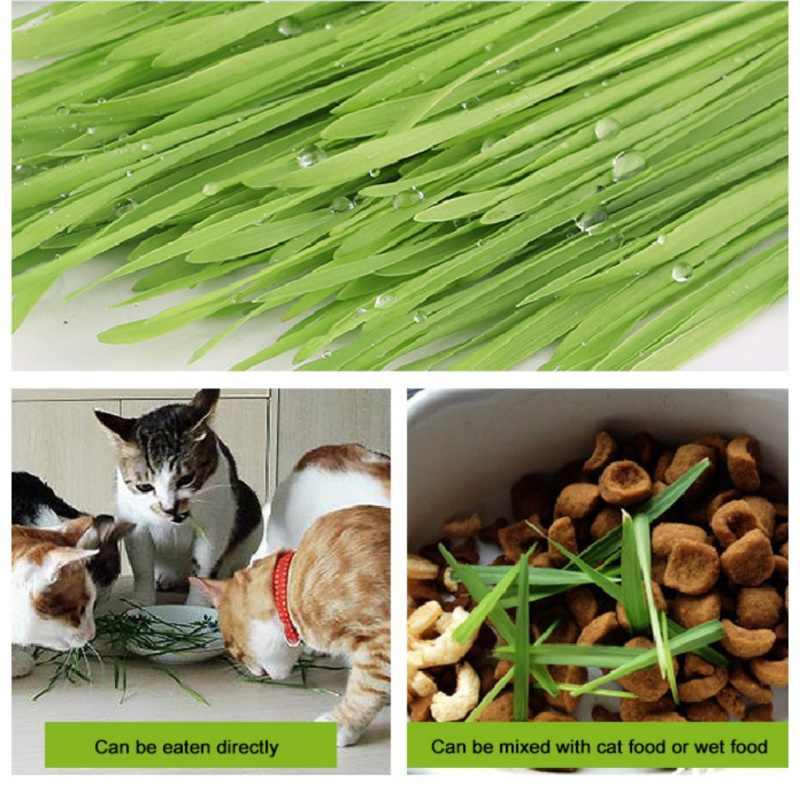 ปลอดสารพิษเอดดัลไวส์กำจัดอาหารเสริมผม Ball Grass Seeds สำหรับแมวสัตว์เลี้ยงอาหารเสริมวิตามิน Play