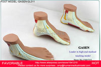 FLAT AND ARCHED FOOT, FOOT ANATOMY MODEL, IMITATION FOOT SKELETON MODEL , FOOT ARCHED FEET FLAT FEET HIGH ARCHES GASEN GL011