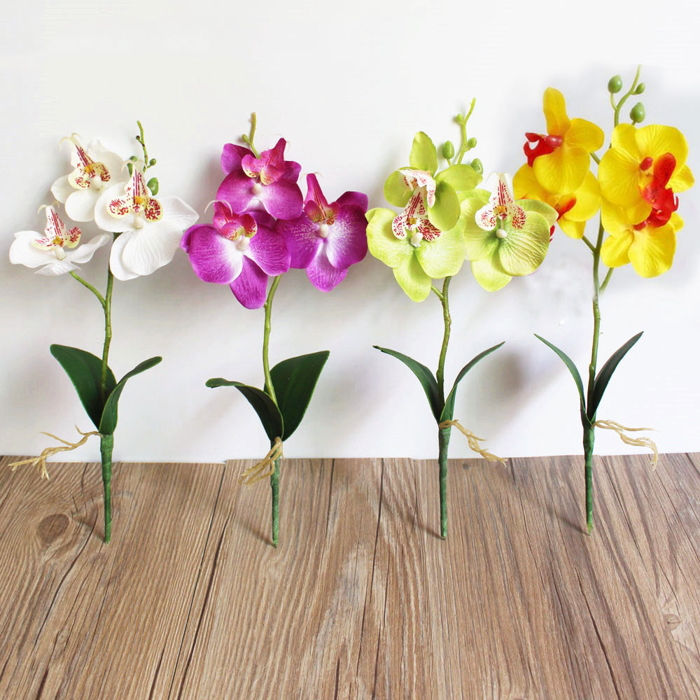 2017 flowers fancy four butterfly orchid meaty plant for Arranging accessories