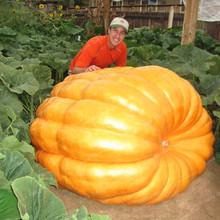 10Pcs Giant Pumpkin Bonsai Halloween Pumpkin Organic Bonsai Vegetables Nutrient-rich Food NON-GMO Edible Plants For Home Garden