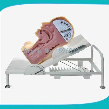 Swallow Mechanism Simulator