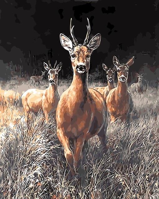 Hewan Padang Rumput Burung Lukisan Minyak Gambar Nomor Digital Mewarnai