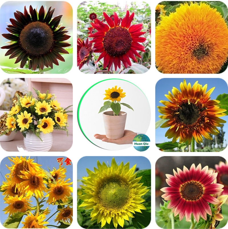 Top 10 Largest Supplies Sunflowers Ideas And Get Free Shipping