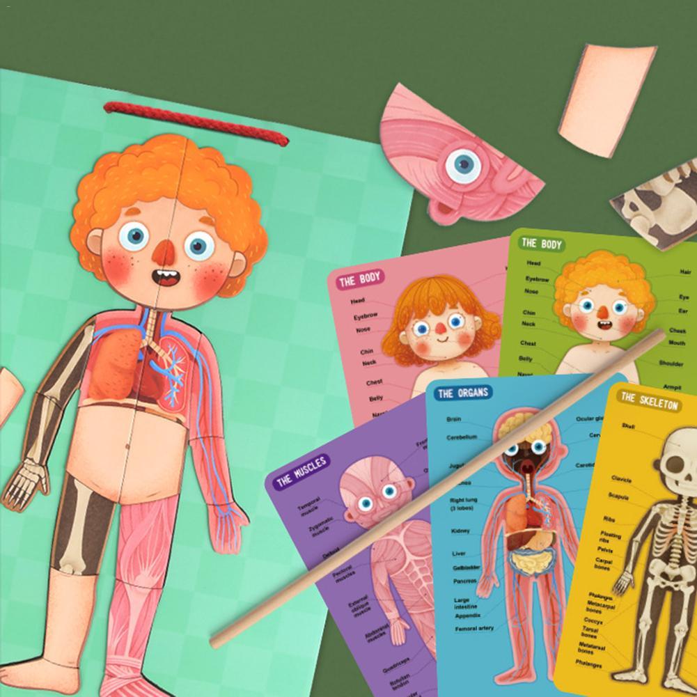 Jouets éducatifs éducatifs pour enfants pour la Structure du corps humain magnétique des enfants Puzzle cognitif pour les cadeaux de la maternelle