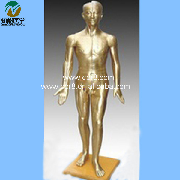 Human Acupuncture Model(Acupuncture Manikin) 178CM BIX-Y1002 WBW196 deluxe acupuncture model 178cm acupuncture model