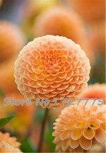 Zinnia elegans Scabiosa Mix Color Small Flower Zinnia about 100 pcs Seeds bonsai pot DIY home garden flower ,easy growing