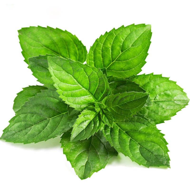 Planta de menta compra lotes baratos de planta de menta for Plantas de purificacion