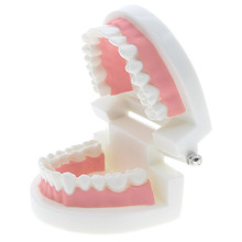 kids Early education toys Brushing training Oral cavity Teeth Dental model Enlightenment education toy(China)
