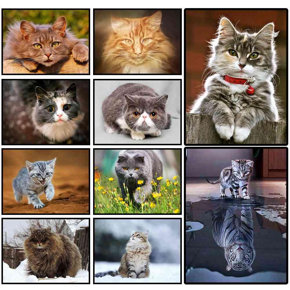 Алмаз живопись, кошки, животные, 5D, DIY, полный квадрат, алмазная вышивка, комплекты, подарки, домашний декор, горный хрусталь