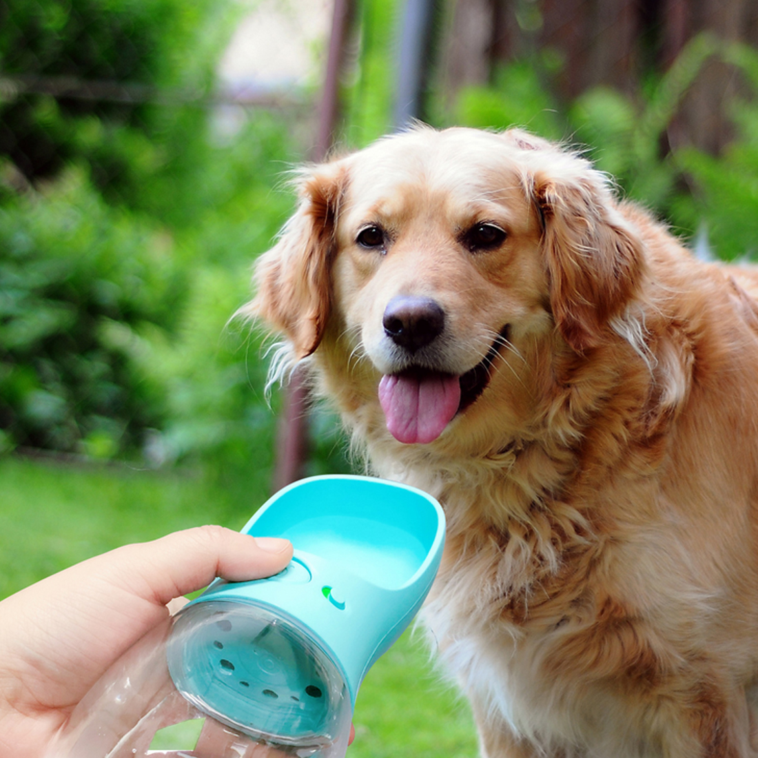 350ml Portable Pet Dog Water Bottle Travel Dog Bowl Cups: 350ML Small Medium Large Dogs Portable Pet Dog Water