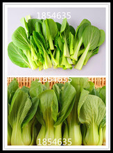 Pak Choi Bok Choy Chinese Cabbage Seeds Vegetable Seeds Easy To Grow 200 pcs /bag(China)