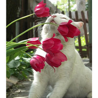 Diy Diamond Drawing 5D Square Diamond Painting Cute Cat Kiss Flowers Complete Painting Rhinestone Cross Stitch